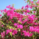 Blütenzauber Afrika