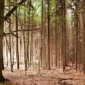 Wald Bäume Laub Waldidylle Waldleben Sonnenlicht