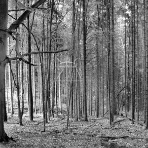 Wald Bäume Laub Waldidylle Waldleben Schwarz Weiß
